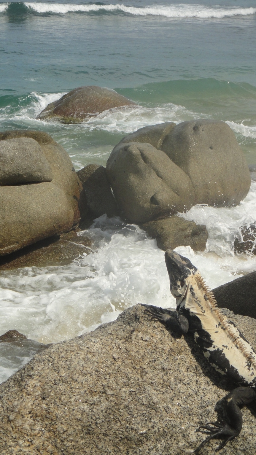 Iguana en la playa